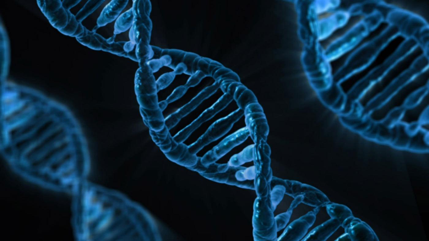 A double-helix strand of DNA.