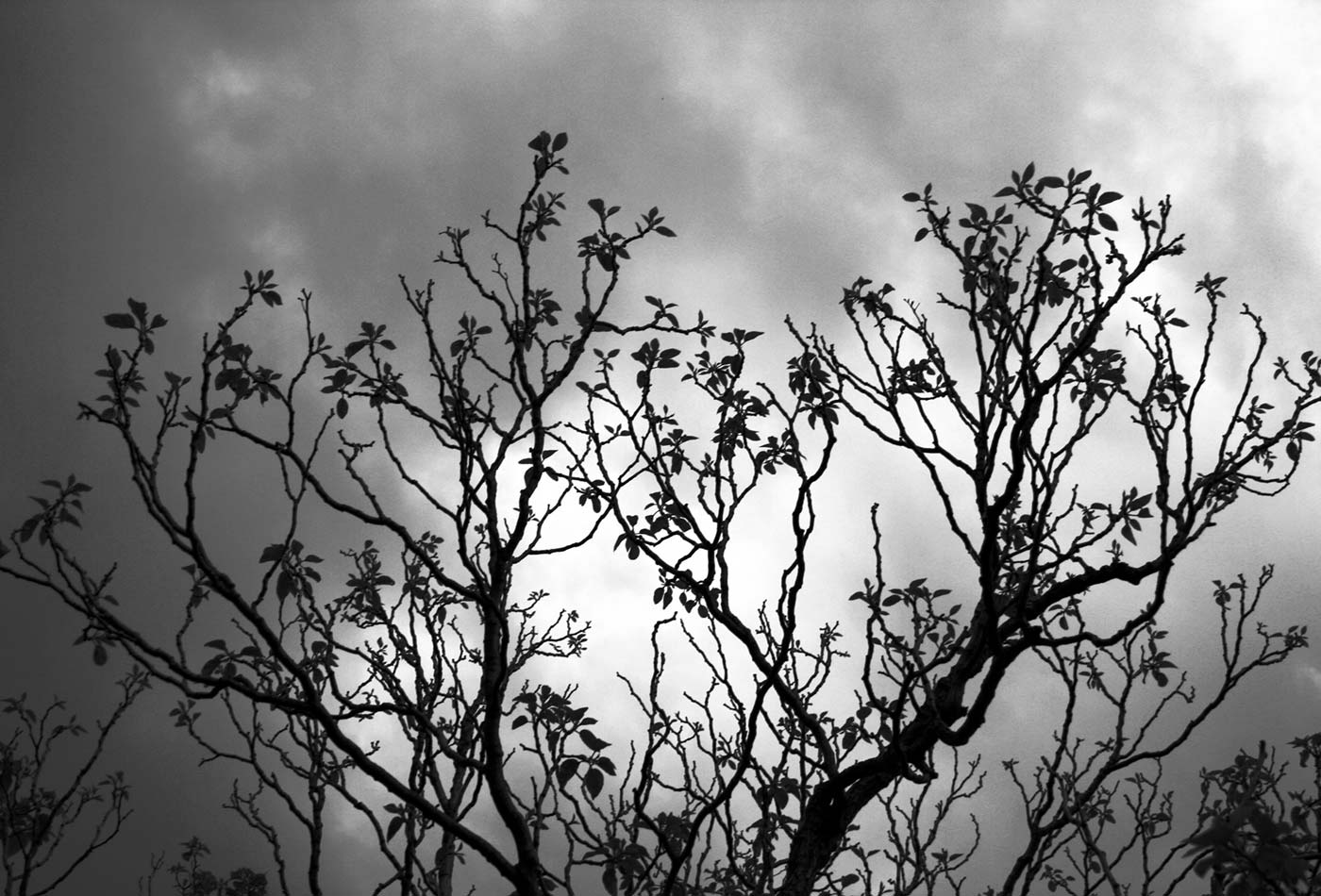 Tree with clouds in black and white.