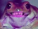 frog with teeth.jpg